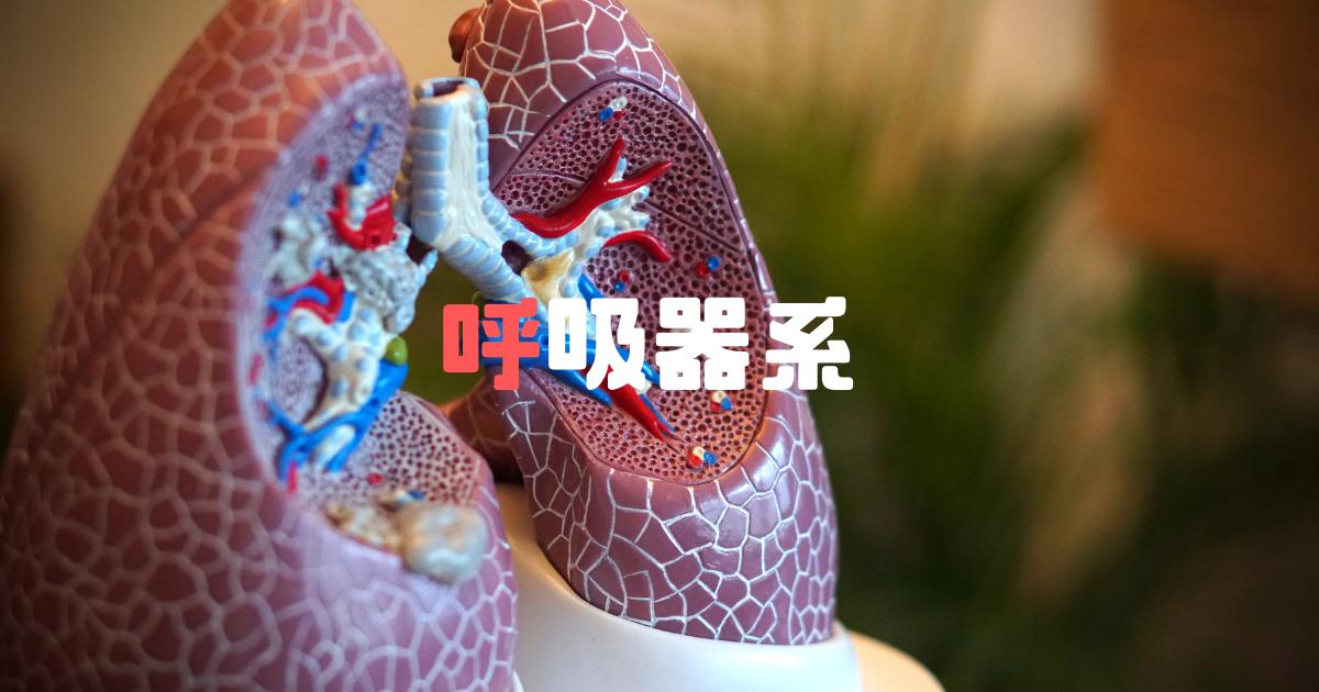 衛生管理者資格、呼吸器について解説