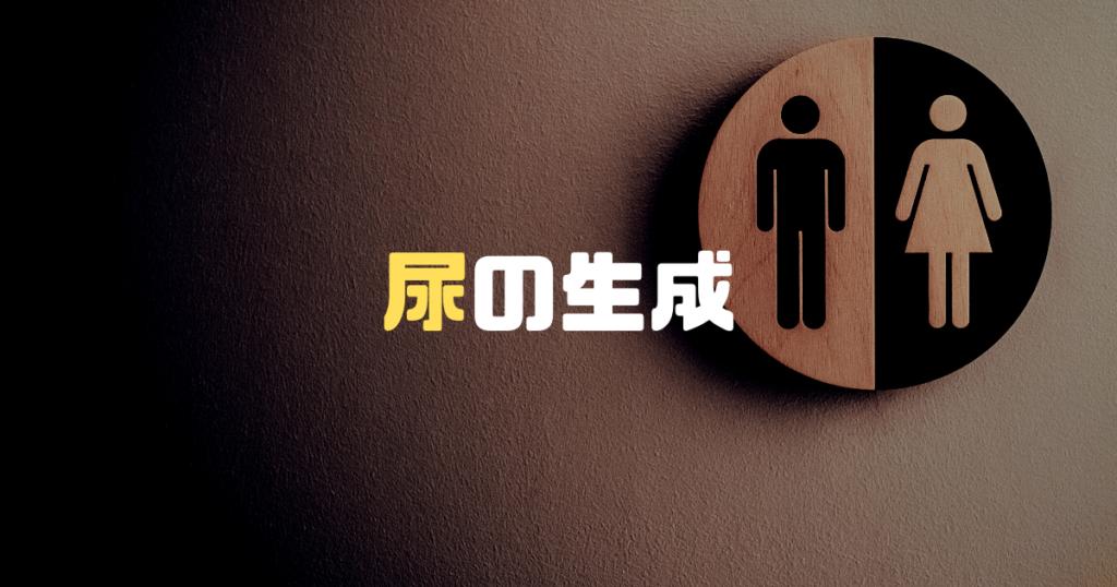 衛生管理者取得、尿の生成を解説